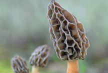 Mushrooms_MicroMacro