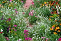 roślinne zachwyty