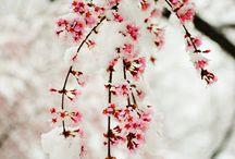 Winter: best holiday  / by Sierra Leclerc