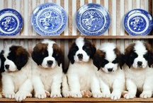 St.Bernards / by Rachel Wilson