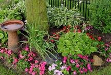 Inspire - Shade Garden