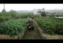 Сад - Огород