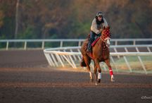 Bee Silva Photography Quarter Horse Racing Season