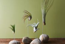 Airplant Ideas