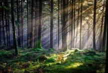 Scotland / by Kristyn Coutts