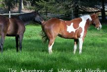 #SaveAmericasMustangs / We must save these animals! / by Jeannette from J-Man and MillerBug