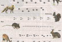 Tropy zwierząt