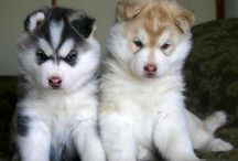 cuddly creatures <3