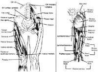 Fitness: Legs and Bum