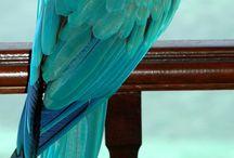 Birds / All birds