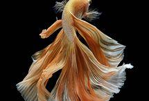Golden Fish Art