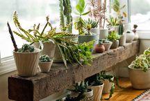 Garden shop inspirations