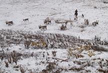 MONGOLIA - Winter