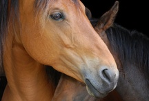 Horse Riding ❤