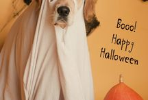 Halloween / decor and more / by Tammy Smith