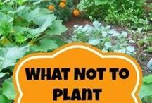 Vegetable and herb garden tricks