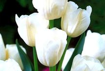 Moon Garden - Plans & Plants / Inspiration, plans and plants to fill a white flowered moon garden