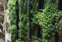 Vertical Gardening / Vertical, urban, creative gardening / by Tina Coccia