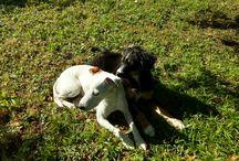Dogs / Meine Hundebegleiter My #Dogs