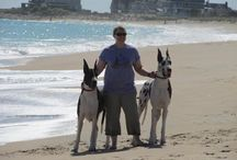 great dane / the big dogs