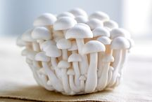 Faq's about our mushrooms