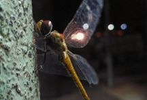 This world doesn't know anything of my UFO encounter with an alien bioluminescent dragonfly & what it told me In 1995. Sept 10th.