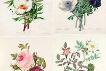 Planche botanique et animalière