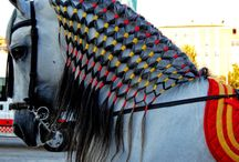 Horses Mane and Tail