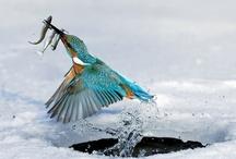 Birds / by Sue Bunch