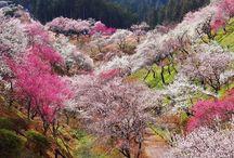 Seasons — Spring Flowers