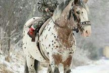 konie ,fantastyka