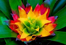 Bromeliads [pure joy]
