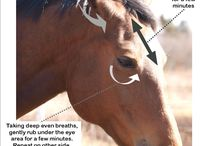 Acupuncture horse pressure points