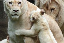 Understanding the Family Bond Of Animals