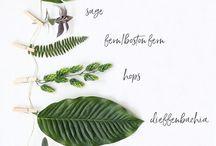 Flower & Foliage names