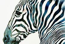 Favoritbild zebra