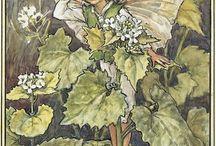 花の妖精 fairies