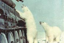 tank and Bear