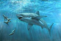 ANIMAL • Shark