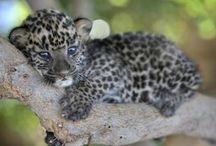 Animales bebé
