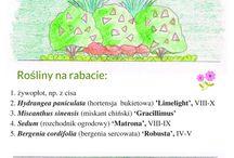 Projekty rabatek / Projekty kolorowych rabatek wykonane przez Krzakowisko