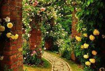 Růže a další kvetoucí keře