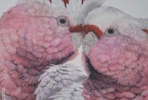 Native Birds & Wild Life Red Hill Gallery, Brisbane. www.redhillgallery.com.au / Wild Life Red Hill Gallery, Brisbane.