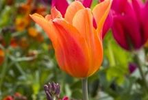Garden kerti virágok / dísz növények