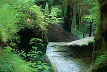 Hocking Hills / by Juniper