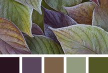 Colour palettes for living room
