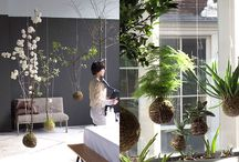 Green culture / Interior and garden inspirations