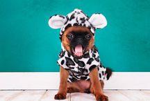 ¡Nos gustan los bichos! / El rincón de nuestras mascotas: perros, gatos, pájaros, hamsters, conejos...