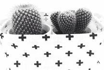 cactus in mandje