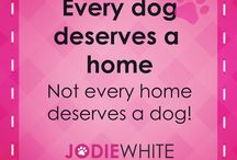 Positive dog sayings / A collection of encouraging words to understand and live by